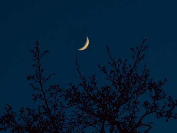 Crescent-Moon-Between-Tree-Branches