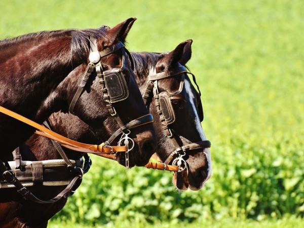 Horses-Reins